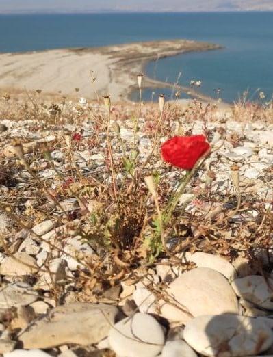 פרח בטיול אופניים בים המלח